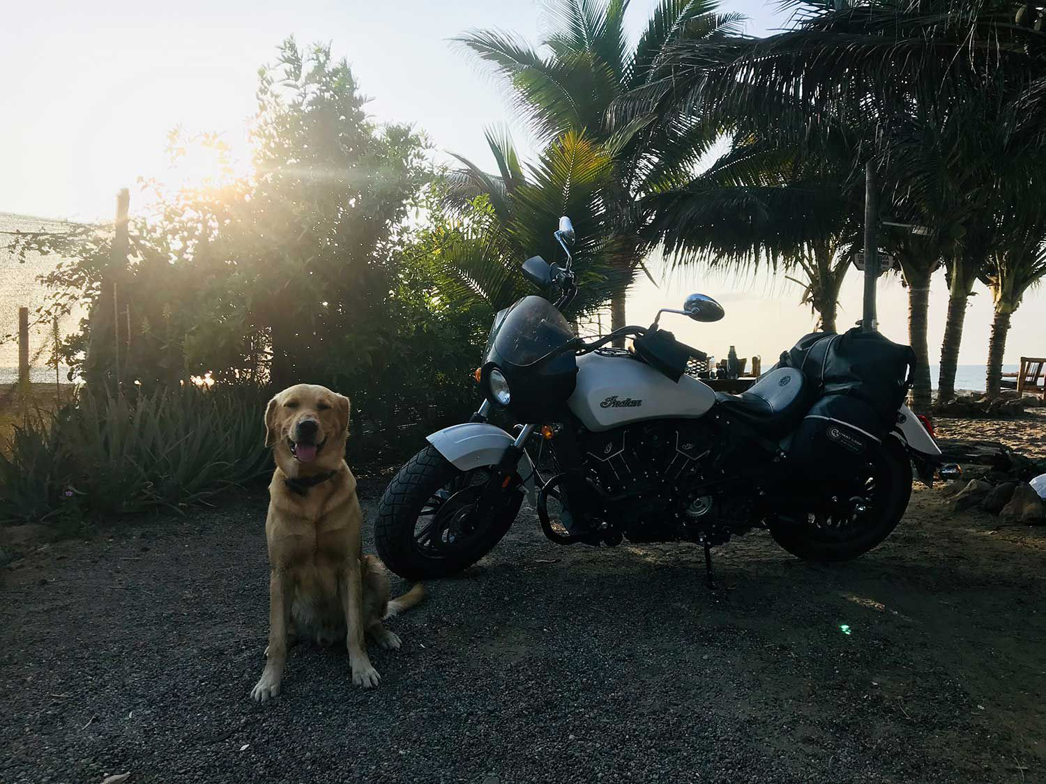 Motorcycles bring out the predator in the friendliest of Fidos.