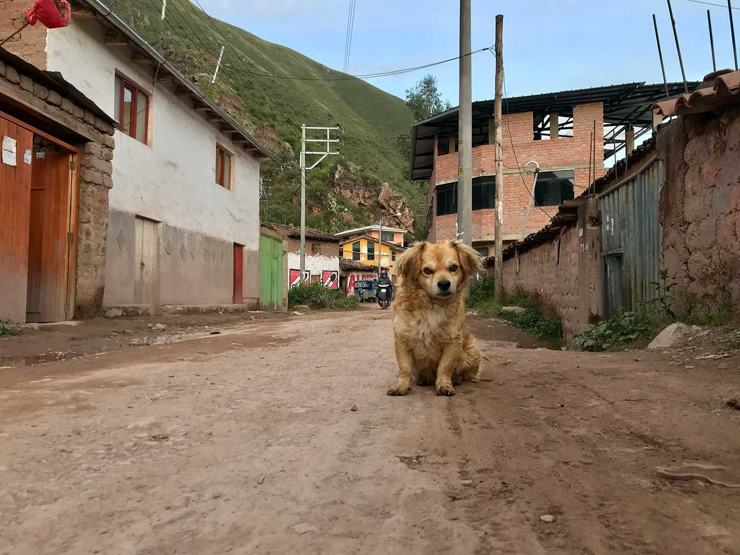 There are basically dogs on the loose everywhere in South America; there's no avoiding this issue. Urubamba, Peru.